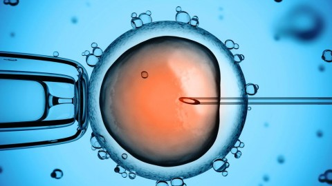 Is Human Embryo Editing Possible? Things to Know